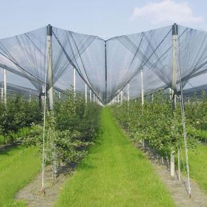 Anti-Hail Net for Trees,Garden,Vegetables and Fruit,3.6-5.0cm oepning,white,green,black Manufactures