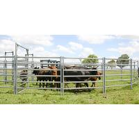 China Cattle Panel Race Bow Farm Fencing Direct Portable Cattle Panels and Accessories on sale