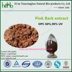 Pinus pinaster Pink Bark Extract Manufactures