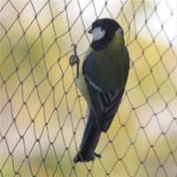 Anti-bird Net,15-30mm opening,1m-25m width,black,white and green colour Manufactures