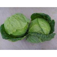 small cabbage Manufactures