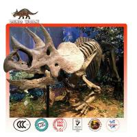 Triceratops Fossil Replica Theme park equipment for sale Manufactures