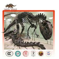 Life Size Dinosaur Fossils for Sale for Science Museum Exhibitions Manufactures