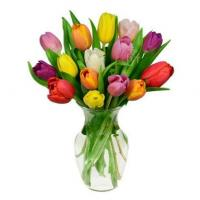 15 Rainbow Tulips Bouquet Manufactures